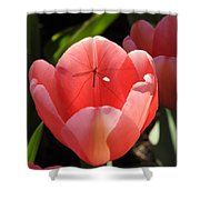 Tulip And The Crane Fly Shower Curtain