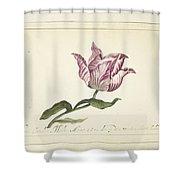 Tulip, Anna Cornelia Moda, 1677 Shower Curtain