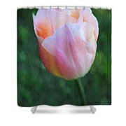 Tulip Apricot Beauty Shower Curtain