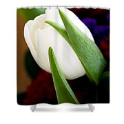 Tulip Arrangement 4 Shower Curtain