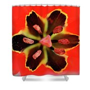 Tulip At Amatzia Forest - 4 Shower Curtain