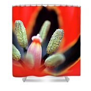 Tulip At Amatzia Forest - 5 Shower Curtain