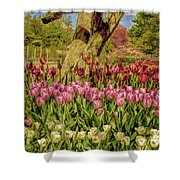 Tulip Bed At Longwood Gardens In Pa Shower Curtain