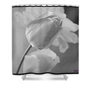 Tulip Black N White Shower Curtain