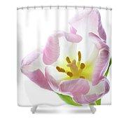 Tulip Bloom 2 Shower Curtain