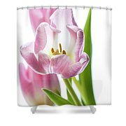 Tulip Bloom 3 Shower Curtain