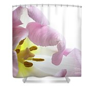 Tulip Bloom Shower Curtain