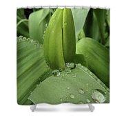 Tulip Bud 2 Shower Curtain