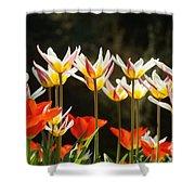 Tulip Field 11 Shower Curtain