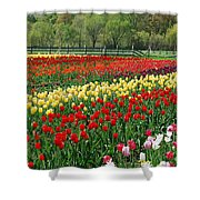 Tulip Fields Shower Curtain