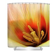 Tulip Flower Artwork 31  Tulips Flowers Macro Spring Floral Art Prints Shower Curtain