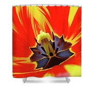 Tulip Flower Floral Art Print Red Yellow Tulips Baslee Troutman Shower Curtain