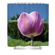 Tulip Flower Landscape Art Print Purple Tulips Baslee Shower Curtain