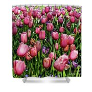 Tulip Flowers  Shower Curtain