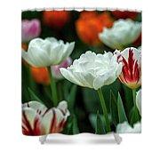 Tulip Flowers Shower Curtain by Pradeep Raja Prints
