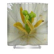 Tulip - Fringed Honeymoon Shower Curtain