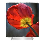 Tulip From Below Shower Curtain