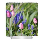Tulip Garden Shower Curtain