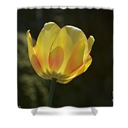 Tulip Glow Shower Curtain