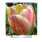 Tulip Shower Curtain