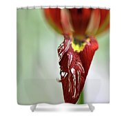 Tulip In Blossom 1 Shower Curtain
