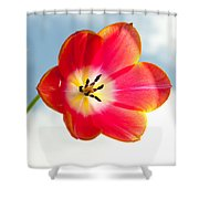 Tulip In The Sky Shower Curtain