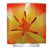 Tulip Inside Flower Orange Tulips Art Prints Baslee Shower Curtain