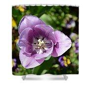 Tulip Lavender Shower Curtain