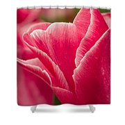 Tulip Layers Shower Curtain