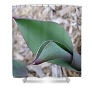 Tulip Leaf Shower Curtain