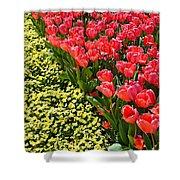 Tulip Line Shower Curtain
