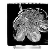 Tulip Liquid Metal Shower Curtain