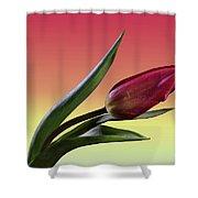 Tulip Love Shower Curtain