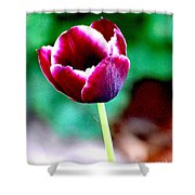 Tulip Me  Shower Curtain