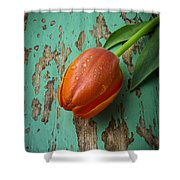Tulip On Old Green Table Shower Curtain