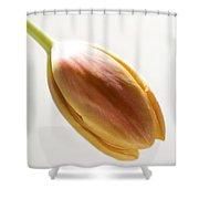 Tulip On White Shower Curtain