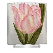 Tulip Watercolor Painting -triumph Tulip Shower Curtain