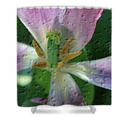 Tulip Passing Beauty Shower Curtain