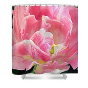 Tulip Peppermint Pink Shower Curtain