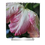 Tulip Perfection Shower Curtain