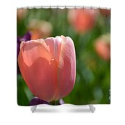 Tulip Pink Shower Curtain