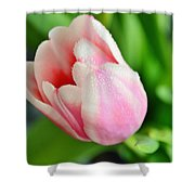 Tulip Portrait Shower Curtain
