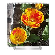 Tulip Red And Orange Shower Curtain