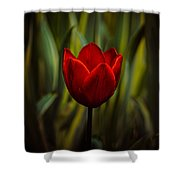 Tulip Shower Curtain by Rod Sterling