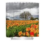Tulip Rows Shower Curtain