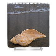 Tulip Shell Shower Curtain