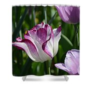 Tulip Splendor Shower Curtain