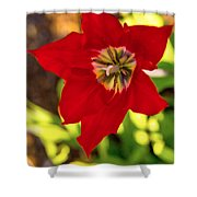 Tulip Star Shower Curtain