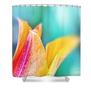 Tulip Tips Shower Curtain