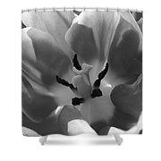 Tulip Tones Shower Curtain